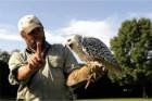 Mann mit Falke auf dem Arm