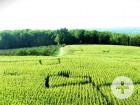 Maislabyrinth - Gut Hügle