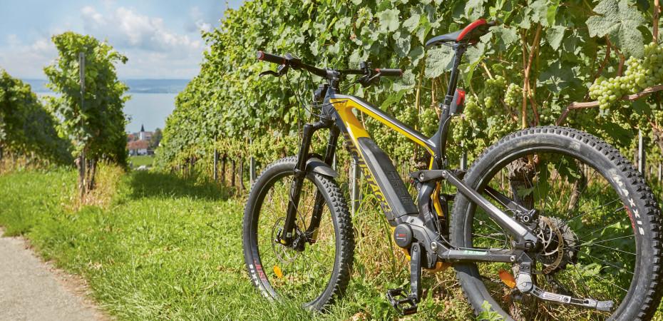 Radfahren am Bodensee mit der ganzen Familie